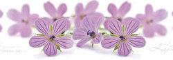Стеновая панель с фотопечатью Фиолетовые цветы.